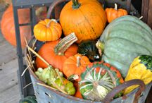 Fall decor / by Tammy Maner