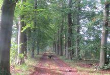 Wandelen nabij Zutphen / Mooie wandelingen in de Veluwezoom en in de omgeving van de IJssel