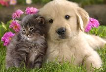 Hund, Katze, Maus, ®™