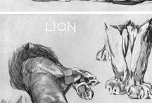 Illustration Lions & big cats