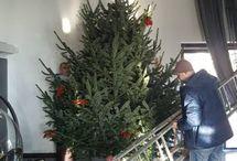 Stavanie velkeho vianocneho stromceka.