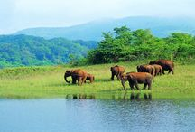 Kerala / Kerala is a stunning destination for adventure tour and great excitement......