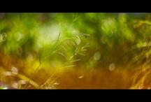 BOKEH M42 / PICTURE BOKEH WITH M42 LENSES
