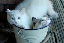 W i gatti!!!