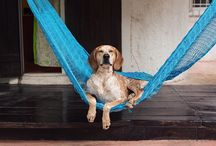 Inspiring dog photos / All the credits for Theron Humphrey (instagram @thiswildidea)