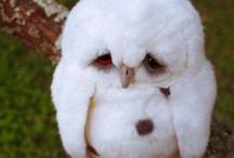 OWLS!!!!!!