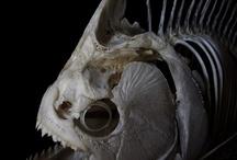 Deep fish