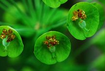 Flowers / My Favorite Flowers (with an emphasis on Pink and Green!) / by Carl J Dellatore