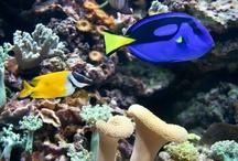 Exclusive Aquarium