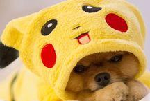 Dog / Pour les gagas des chien