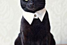 J'habille mon chat / Qui a dit que la mode n'était que pour les stars ?