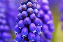 Spring Bulbs / Ideas for planting Spring/Summer flowering bulbd