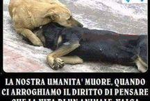 amore per animali