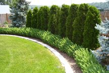 fence side landscaping