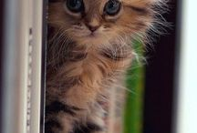 Słodkie zwierzaki *-*