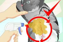 herbal flea remedy for cats