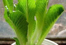 Plantes / Plantes i el seu món, com cultivarles, malures, usos, etc.