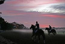 Beautiful Race tracks / Awesome Race Horses