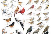 Learn {Birds}
