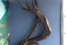 driftwood antlers / Custom art