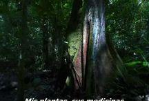 Deforestación y desmonte / Yo soy el bosque