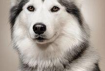 kawai dogs