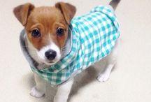 Dogyyyyy:) / Szeretem az allatokat!:)