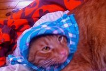 Sans chats l'Internet serait moins rigolo