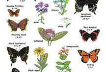Outdoor: Butterfly and Hummingbird Garden