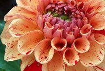 Plants/flowers I want / by Chrystal Womble Kellam