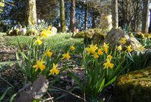 FLOWERS GARDEN NATURE FRANCE LANDE / Toutes les couleurs du sud ouest de la france pour la beauté de la nature