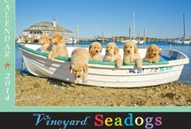 VINEYARD SEADOGS CALENDAR 2014 / A FETCHING GIFT IDEA! FEATURES DOZENS AND DOZENS OF ALL NEW SEADOGS IN AND AROUND THE BEAUTIFUL WATERS OF MARTHA'S VINEYARD. THESE JOYOUS, COMICAL CANINE CHARACTERS ROMP IN THE SURF, GO BOATING, FISHING, EVEN BOOGIE BOARDING. FOR EVERYBODY THAT LOVES THE VINEYARD, THE BEACH, THE OCEAN AND OF COURSE DOGS! GUARANTEED TO MAKE YOU SMILE!