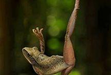 Tanec / Joga