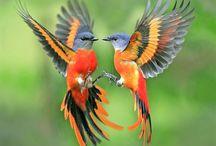 Animals & Birds / My favorite Animals and Birds