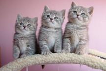 Cats! / by Faisal Abid