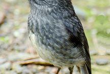 NZ's Fauna