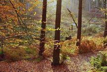 Autumn colours in Cheshire #HeathrowGatwickCars.com