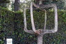 Weird Trees