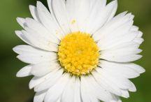 5 white flowers