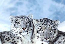 Snowpanters