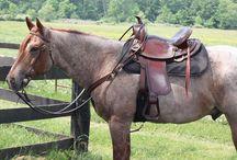 Le Quarter Horse / L'origine du Quarter Horse, qui a le plus gros effectif du monde, remonte à l'époque de la colonisation de l'Amérique.