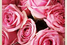Rosa gleder