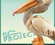 pelican+