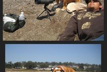 In love...Bulldog<3