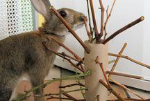 Kanin/rabbit