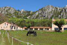 Passion Chevaux-Tourisme Équestres-Randonnées-Chevaux -Fleurs de Soleil France / Tourisme équestre - randonnées - chevaux / horses .Cadre Noir Saumur-