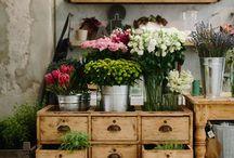 Magasins de fleurs