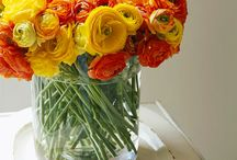 Flowers / by Lauren Greene