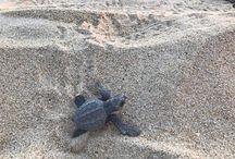 Tour Liberación de Tortugas