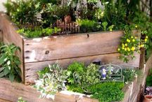 Garden - boxes, containers, baskets...